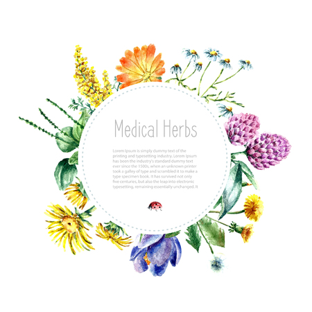 herbarium: Hand drawn watercolor botanical illustration. Medical herbs drawing isolated on the white background. Medical herbs illustration, herbarium banner.vector