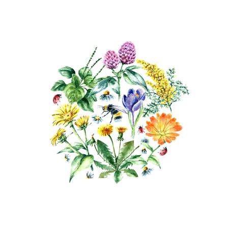 dibujado a mano de acuarela ilustración botánica. Plantas medicinales dibujo aislado en el fondo blanco. Hierbas medicinales ilustración, el herbario banner.Round frame.Vector