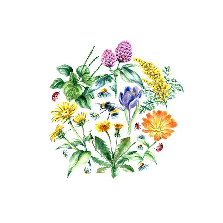 calendula flower: Hand drawn watercolor botanical illustration. Medical herbs drawing isolated on the white background. Medical herbs illustration, herbarium banner.Round frame.vector