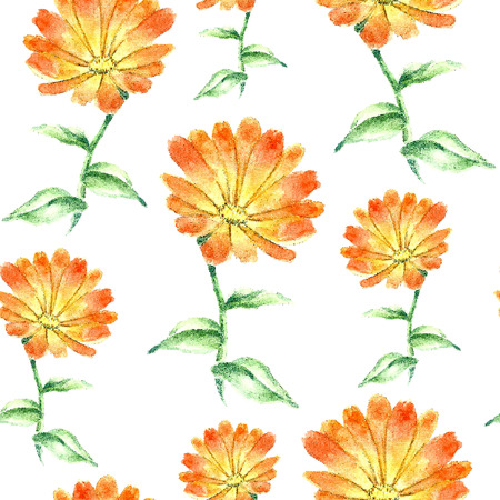 curative: Hand drawn watercolor botanical illustration of the calendula plant. Calendula drawing isolated on the white background. Medical herbs illustration, herbarium. seamless pattern. vector Illustration