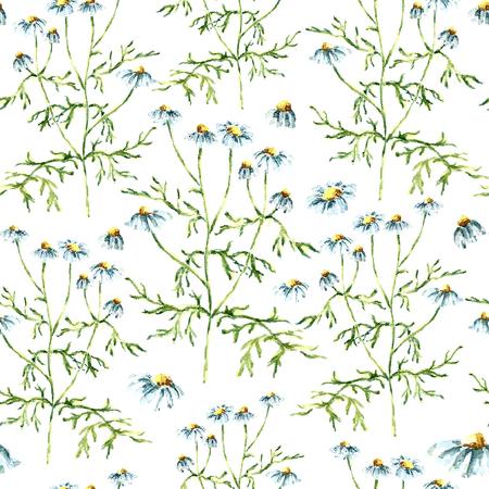 white tea: Hand drawn watercolor botanical illustration of the chamomile plant. Chamomile drawing isolated on the white background. Medical herbs illustration, herbarium. seamless pattern. vector