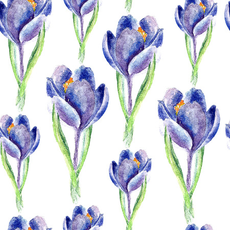 saffron: Hand drawn watercolor botanical illustration of the saffron plant. Saffron drawing isolated on the white background. Medical herbs illustration, herbarium. seamless pattern. vector