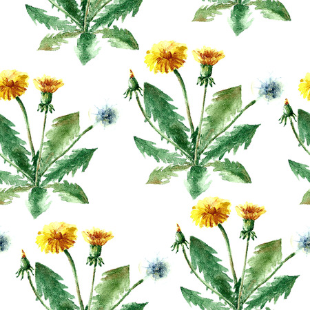 curative: Hand drawn watercolor botanical illustration of the dandelion plant. Dandelion drawing isolated on the white background. Medical herbs illustration, herbarium. seamless pattern. vector