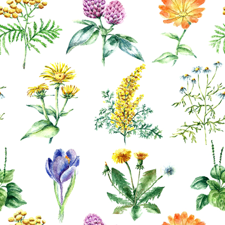 calendula flower: Hand drawn watercolor botanical illustration. Medical herbs drawing isolated on the white background. Medical herbs illustration, herbarium. seamless pattern. vector