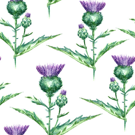 thistle: Hand drawn watercolor botanical illustration of the milk thistle plant. Milk thistle drawing isolated on the white background. Medical herbs illustration, herbarium. seamless pattern. vector
