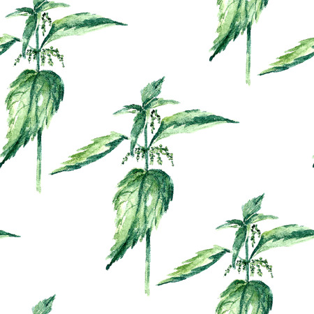 officinalis: Hand drawn watercolor botanical illustration of the nettle plant. Nettle drawing isolated on the white background. Medical herbs illustration, herbarium. seamless pattern. vector
