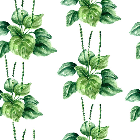 curative: Hand drawn watercolor botanical illustration of the plantain plant. Plantain drawing isolated on the white background. Medical herbs illustration, herbarium. seamless pattern. vector Illustration