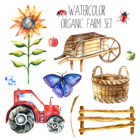 Watercolor organic farm. Hand drawn objects tractor, sunflower, truck, fence, basket, butterfly, ladybug and spica isolated on white background vector