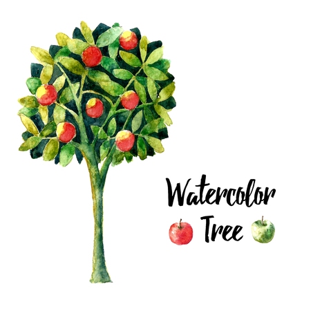 apple orchard: Realistic brush watercolor apple tree. Floral element apple tree for floral design. Realistic watercolor painting. Hand drawn illustration apple tree. vector