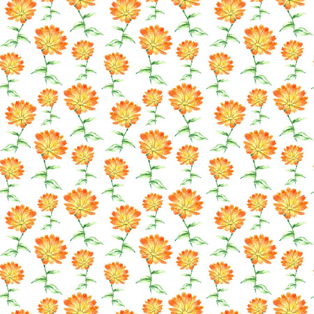 oriental medicine: Hand drawn watercolor botanical illustration of the calendula plant. Calendula drawing isolated on the white background. Medical herbs illustration, herbarium. seamless pattern. vector Illustration