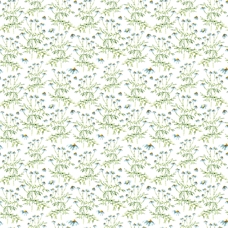 marigold: Hand drawn watercolor botanical illustration of the chamomile plant. Chamomile drawing isolated on the white background. Medical herbs illustration, herbarium. seamless pattern. vector