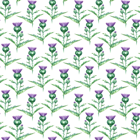 thistle plant: Hand drawn watercolor botanical illustration of the milk thistle plant. Milk thistle drawing isolated on the white background. Medical herbs illustration, herbarium. seamless pattern. vector