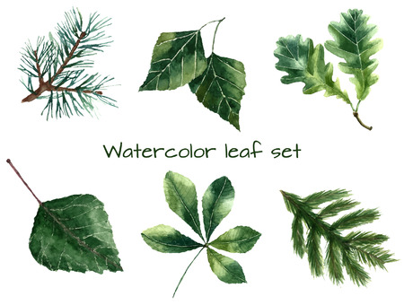 isolated tree: Set of watercolor leaves: pine, chestnut, oak, beech, poplar, fir brunch.  Vector illustration