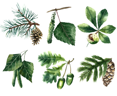 oak: Set of watercolor leaves: pine, chestnut, oak, beech, poplar, fir brunch.