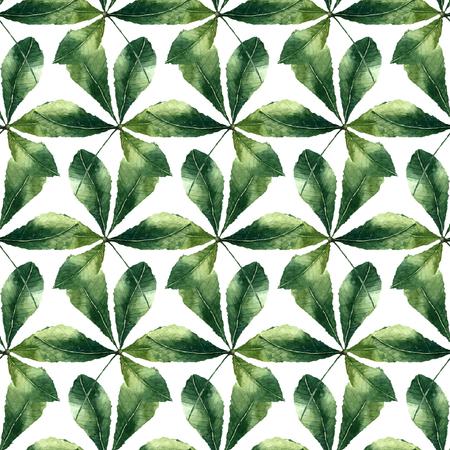 chestnut tree: Chestnut leaf watercolor seamless pattern. Vector illustration. Illustration