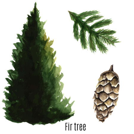 cone: Fir tree watercolor. Vector illustration.