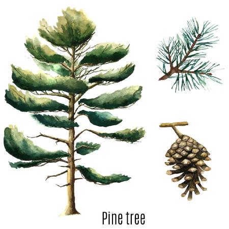 cone: Pine tree watercolor. Vector illustration.