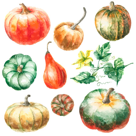 Watercolor pumpkin. Hand drawn painting set pumpkins with pumkins flower and leaves. Isolated illustration on white background.