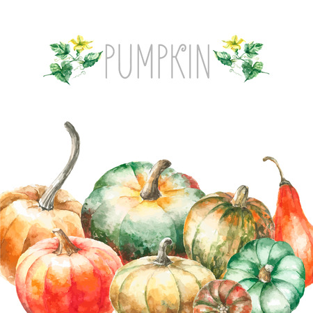 Aquarel pompoen. Hand getrokken schilderen set pompoenen met pumkins bloemen en bladeren. Geïsoleerde illustratie op een witte achtergrond.