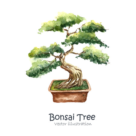 Watercolor Tree Bonsai. Hand draw japanese tree. Vector illustrations. 矢量图像