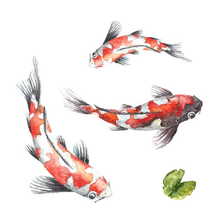 kohaku: Watercolor red koi carps. Isolated hand draw fishes. Vector illustrations. Illustration