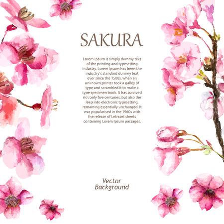 Akwarela kwiat wiśni. Rysowania kwiat wiśni sakura gałęzi i kwiatów. Ilustracji wektorowych.