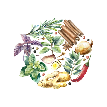 Watercolor herbs and spices frame. Round frame with hand painted food objects mint, basil, rosemary, parsley, oregano, thyme, bay leaves, green onion, ginger, pepper, vanilla.