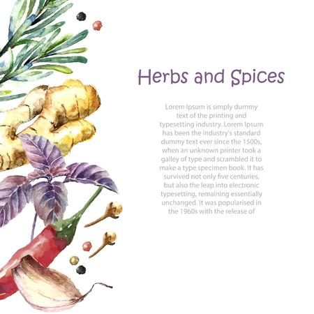 kulinarne: Akwarela zioła i przyprawy ramki. Ręcznie malowane żywności obiektów mięta, bazylia, rozmaryn, pietruszka, oregano, tymianek, liście laurowe, zieloną cebulę, imbir, pieprz, wanilię. Ilustracja