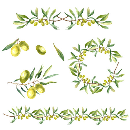Watercolor green olive branch on white background . Hand drawn isolated natural vector object with place for text. Healthy and natural card design