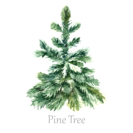 Watercolor christmas tree. Isolated pine tree illustration.Vector