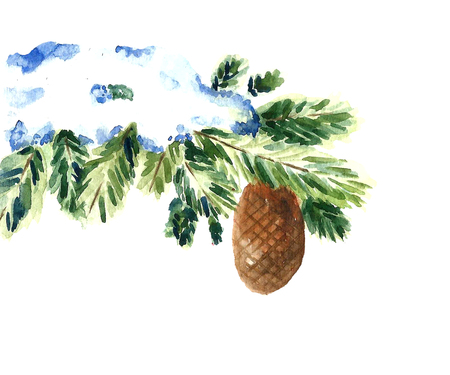 Watercolor snow christmas branch and cone. Isolated winter tree illustration.Vector