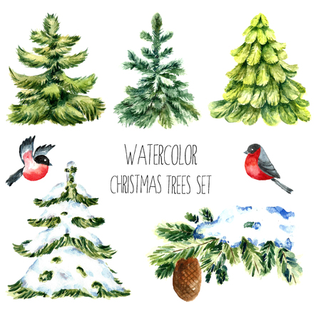 Watercolor christmas trees. Isolated pine tree, winter branch, bullfinches illustrations. Vector Ilustração
