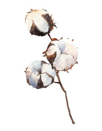 Waterverf Katoenplant, geïsoleerd op een witte achtergrond.