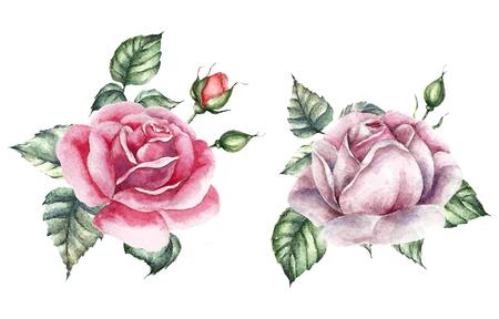 bouquet de fleurs: Ensemble d'éléments Roses. Carte de mariage en aquarelle.