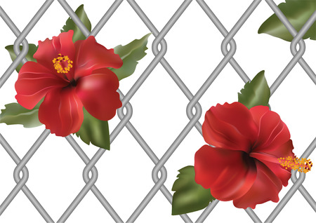 beautiful red hibiscus flower: Flores rojas con hojas en la cuadr�cula de fondo.