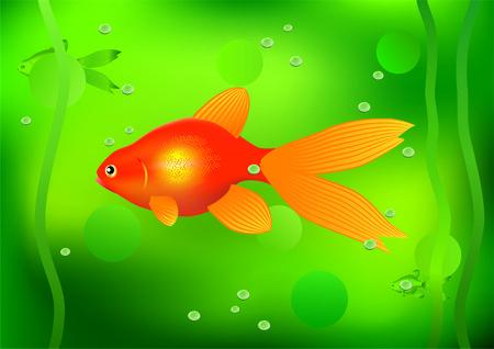gold fish bowl: Goldfish.