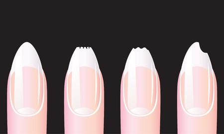 Nails. Vector