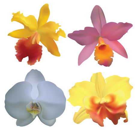 orchids: Orchidee.