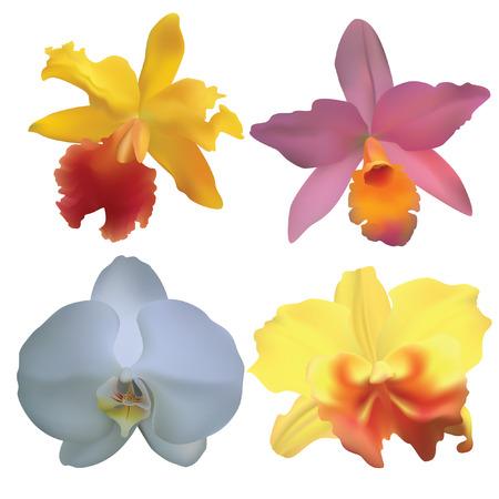 amarillo y negro: Orquídeas.  Vectores