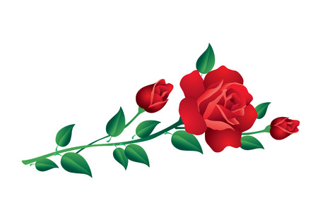 posy: red roses