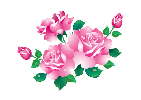 pink and green: Pink roses with green leaves