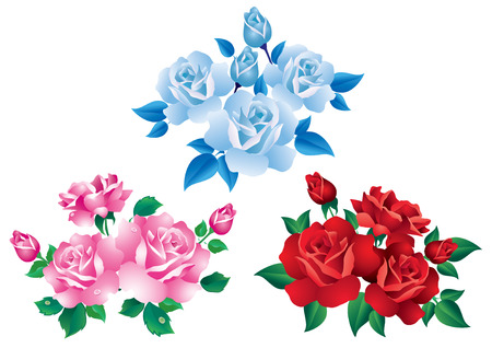 rose leaf: Bouquets with red, pink and blue roses  Illustration