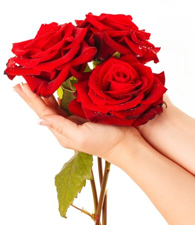 Beautiful red roses covered by drops of water in womens hands.