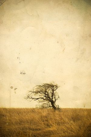 Lonely tree landscape on vintage background