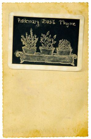 Aromatic herbs drawing on old paper background photo