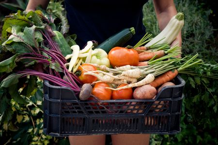 Holding crate with fresh vegetables Stockfoto