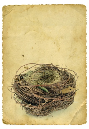 Empty nest on old paper background. Isolated on white. photo