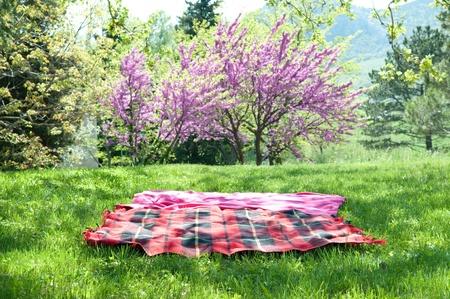 Picknickdecke  Standard-Bild