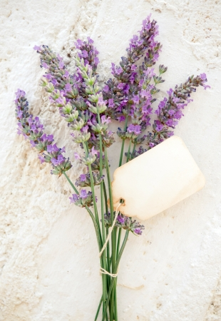 Fresh lavender with old blank paper tag photo