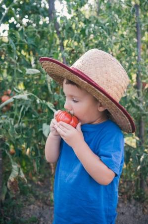 red soil: Cute little boy eating tomato  Stock Photo